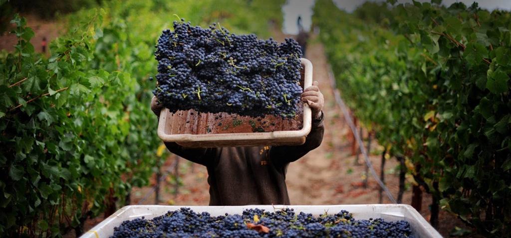 The Cyprus showcase of Wine: Commandaria
